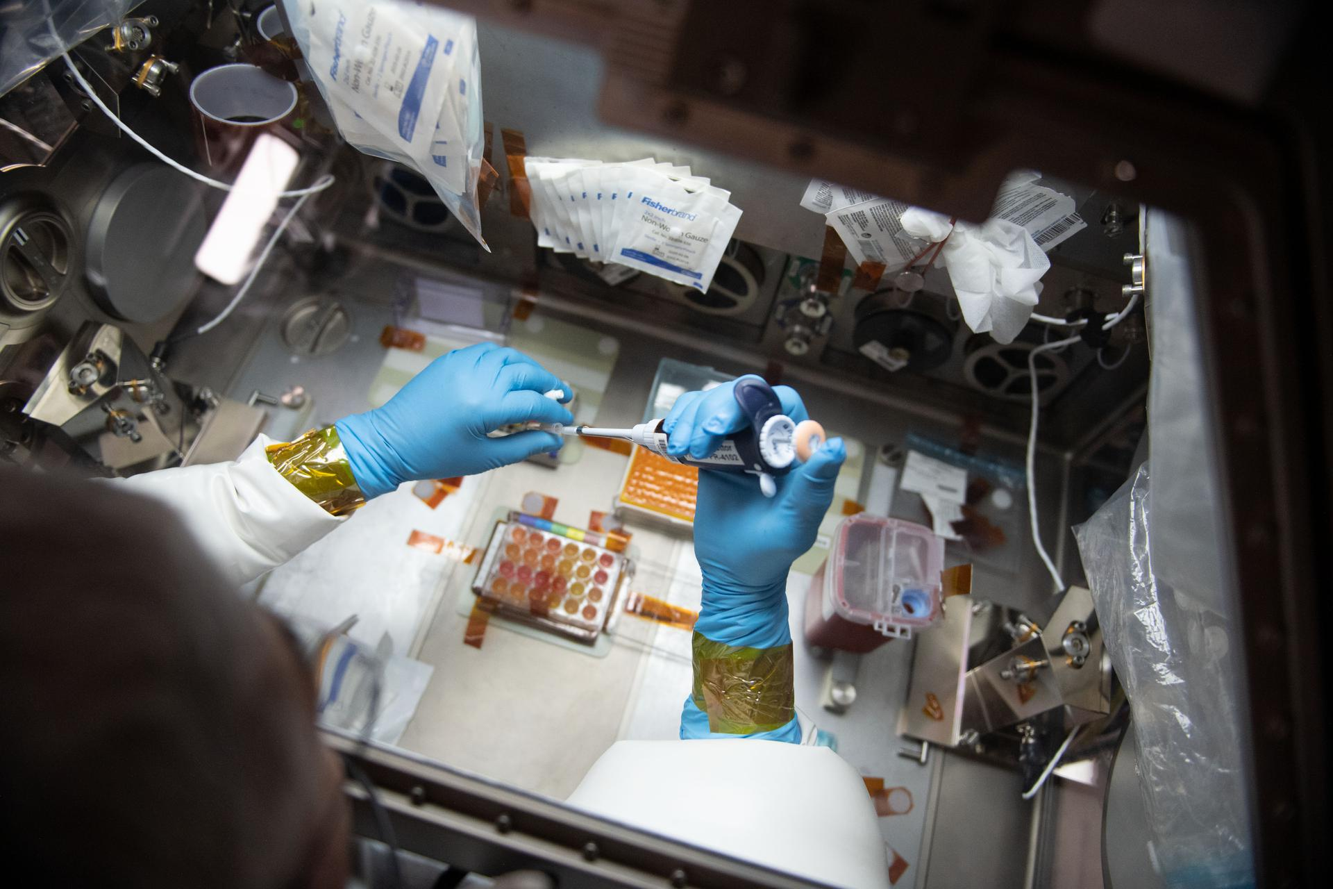 Researching Immune Response on the Space Station